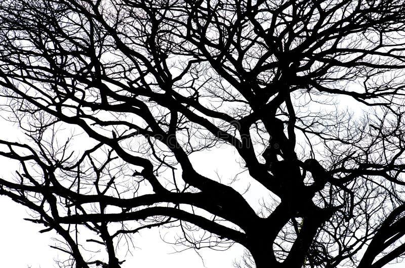 Download Silueta Del árbol De La Rama Imagen de archivo - Imagen de árbol, para: 64203593