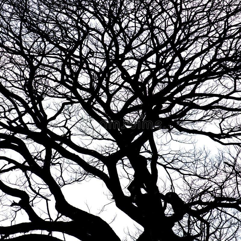 Download Silueta Del árbol De La Rama Foto de archivo - Imagen de crepúsculo, forma: 64203628