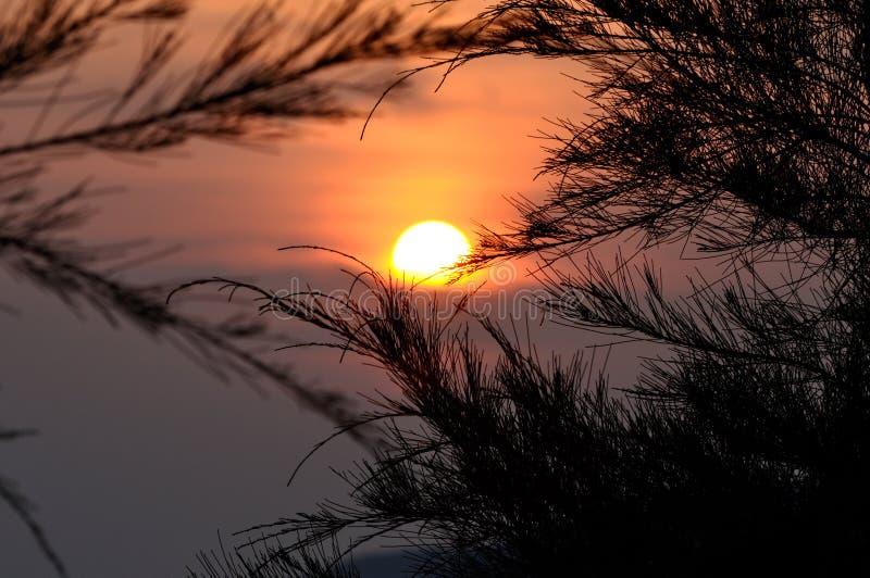 Silueta del árbol de pino durante puesta del sol imágenes de archivo libres de regalías