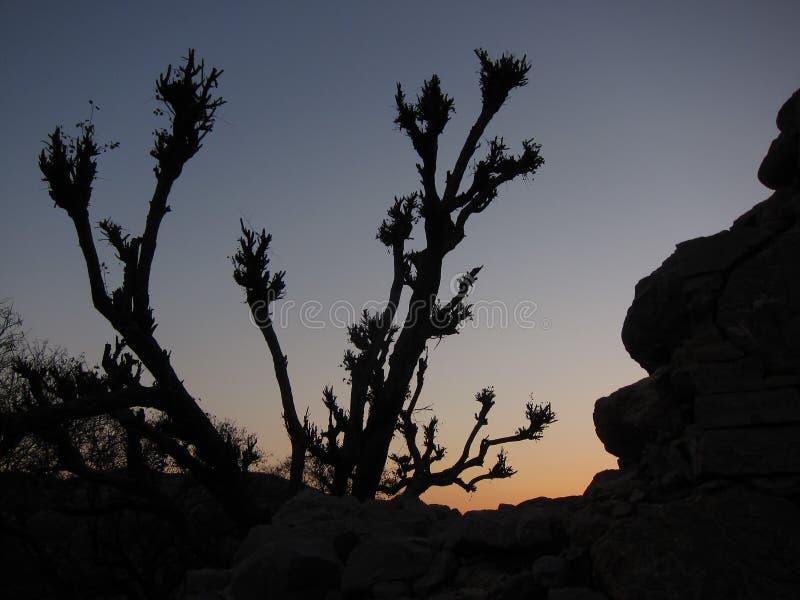 Silueta del árbol de Taksilla fotografía de archivo