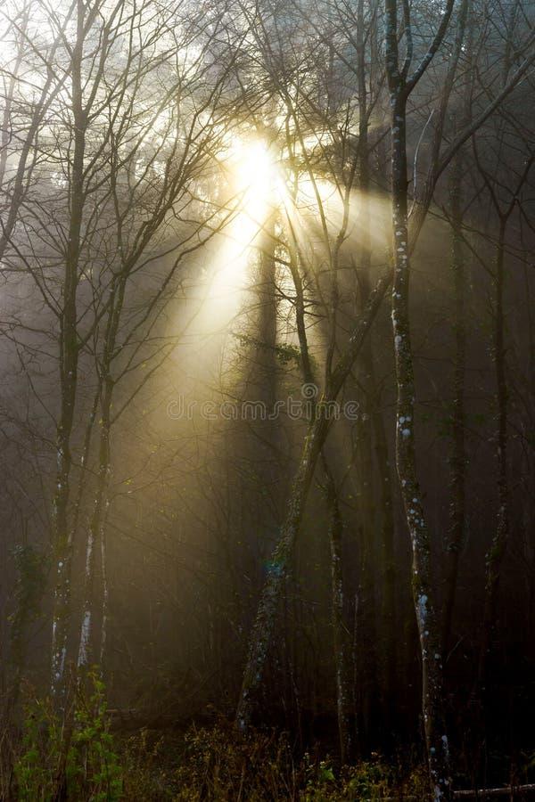Silueta del árbol del invierno en gran niebla fotos de archivo