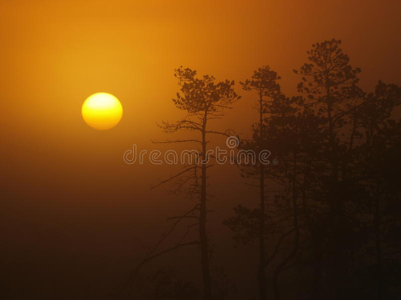 Silueta del árbol del sol y de pino de levantamiento imágenes de archivo libres de regalías