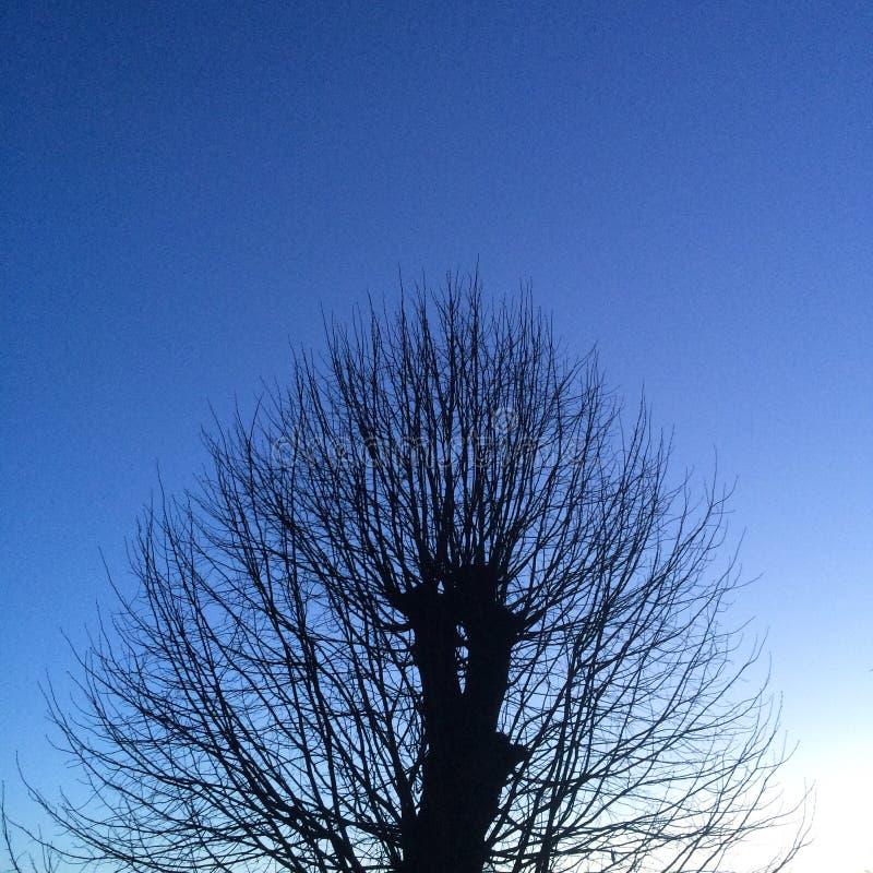 Silueta del árbol en el amanecer en fondo azul foto de archivo