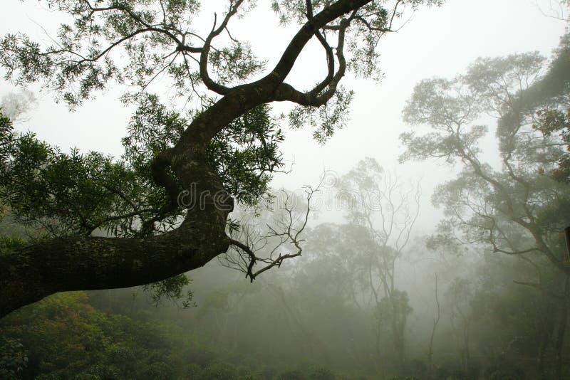 Silueta del árbol en la niebla del bosque imágenes de archivo libres de regalías