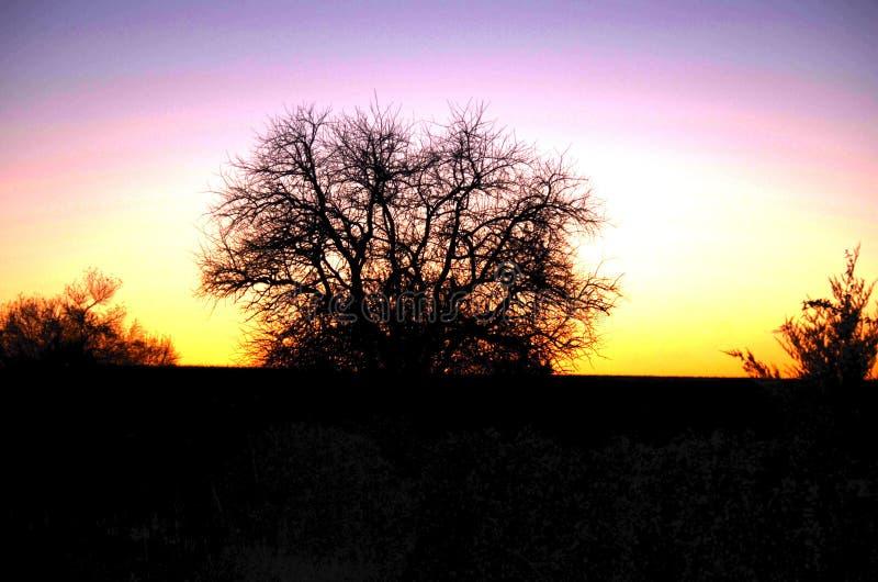 Silueta del árbol en la puesta del sol imagen de archivo libre de regalías