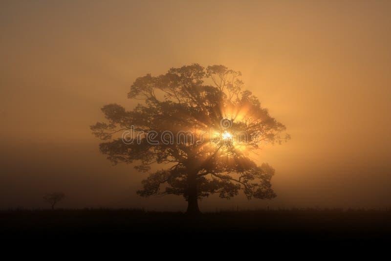 Silueta del árbol en niebla imágenes de archivo libres de regalías