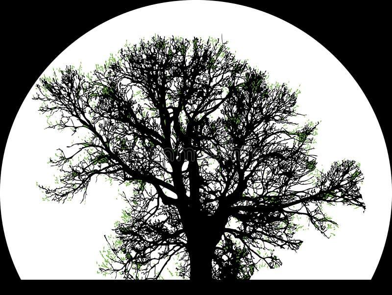 Silueta del árbol grande ilustración del vector