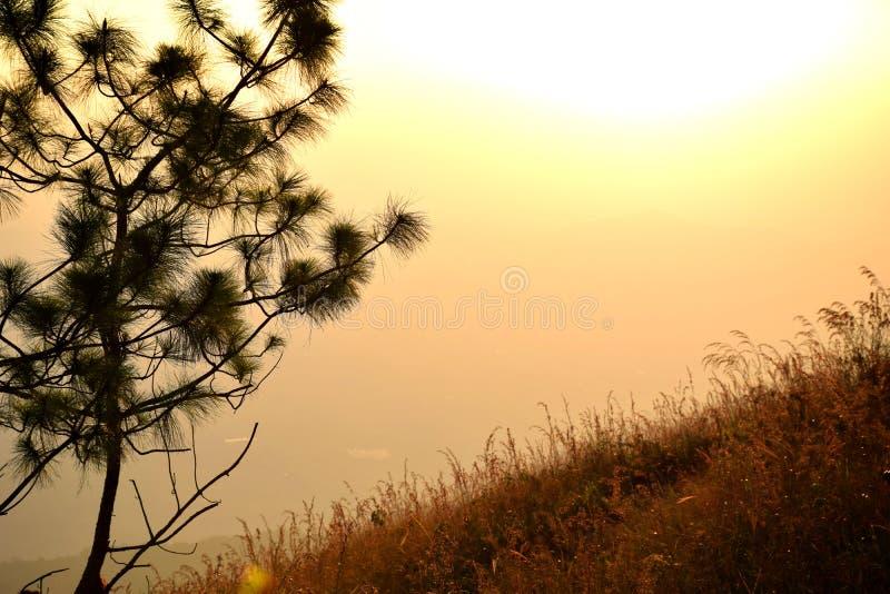 Silueta del árbol y de la hierba en el fondo de la colina cuando puesta del sol fotos de archivo libres de regalías
