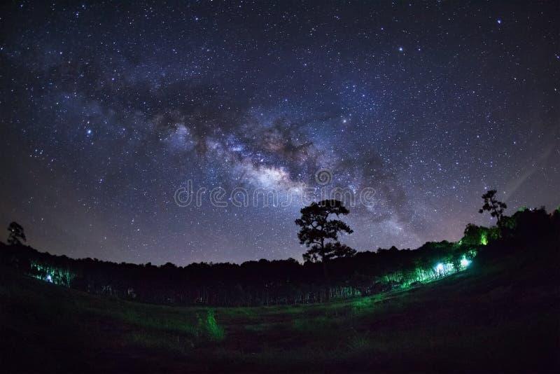 Download Silueta Del árbol Y De La Vía Láctea De Pino En Phu Hin Rong Kla Foto de archivo - Imagen de sagitario, necrópolis: 64213408