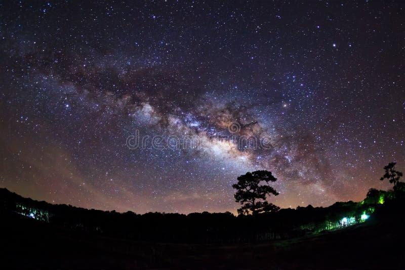 Download Silueta Del árbol Y De La Vía Láctea De Pino En Phu Hin Rong Kla Foto de archivo - Imagen de racimo, aquila: 64213416