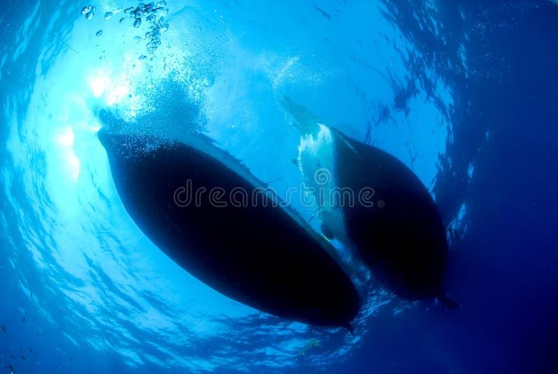 Silueta del baile de fin de curso de dos naves subacuático fotos de archivo libres de regalías