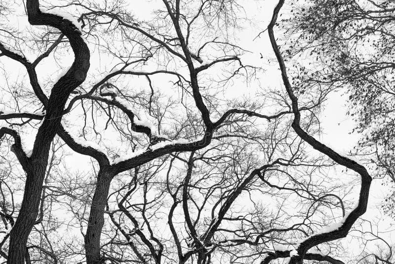 Silueta del bosque del alto contraste imágenes de archivo libres de regalías