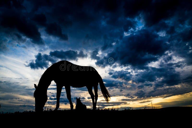 Silueta del caballo foto de archivo