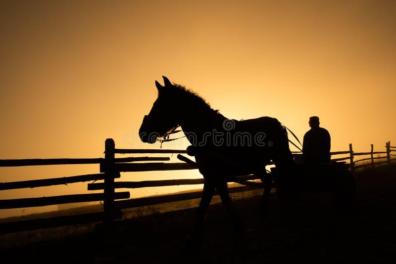 Silueta del caballo y del carro por la mañana fría en campo de la montaña en Rumania fotos de archivo