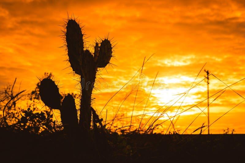 Silueta del cactus del Saguaro en la puesta del sol imagen de archivo