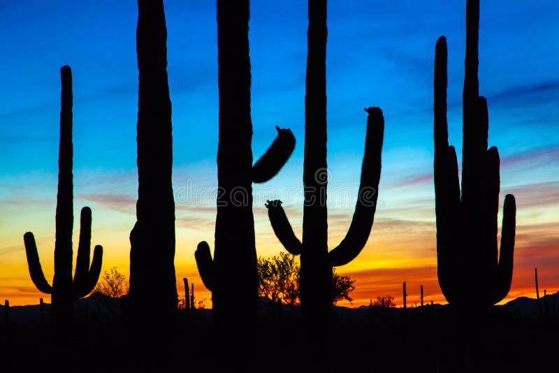 Silueta del cactus del Saguaro en la puesta del sol vibrante fotos de archivo libres de regalías