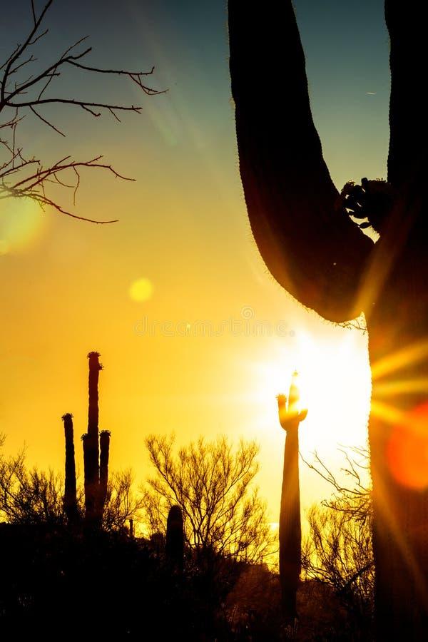Silueta del cactus del Saguaro en la salida del sol colorida foto de archivo