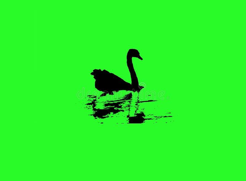 Silueta del cisne mientras que nada en la pantalla verde, logotipo foto de archivo libre de regalías