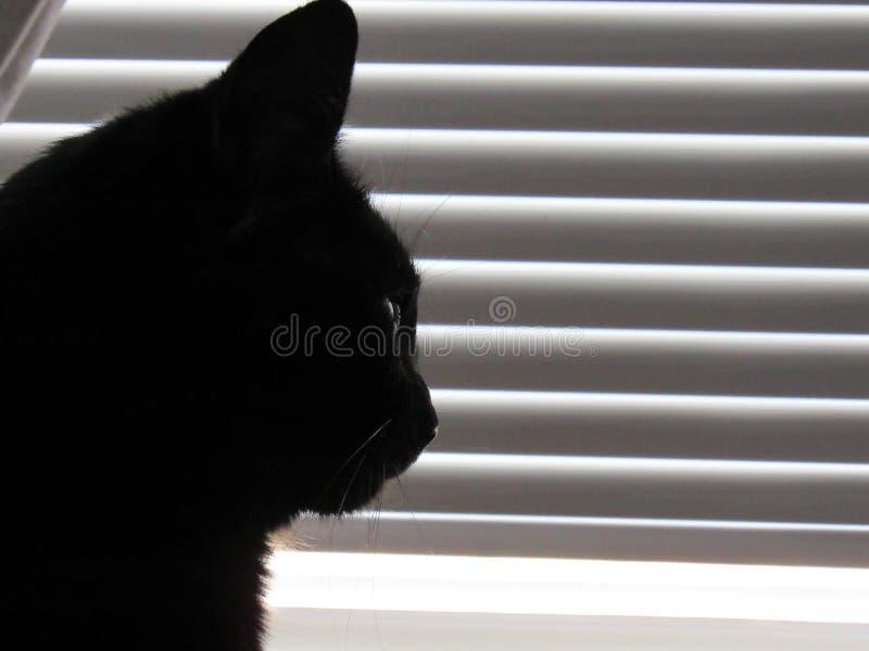Silueta del gato cerca de las persianas blancas fotos de archivo