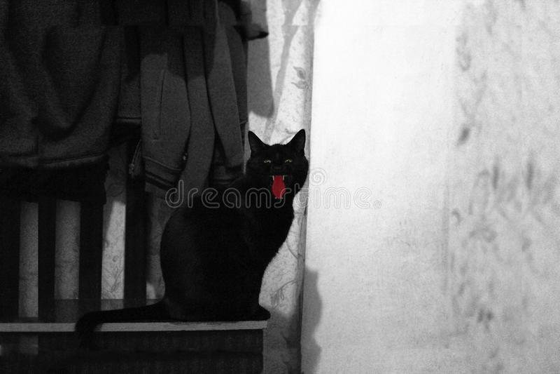 Silueta del gato negro fantasmagórico en la noche, el negro y el blanco de Halloween foto de archivo libre de regalías