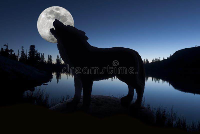 Silueta del lobo del grito fotografía de archivo libre de regalías