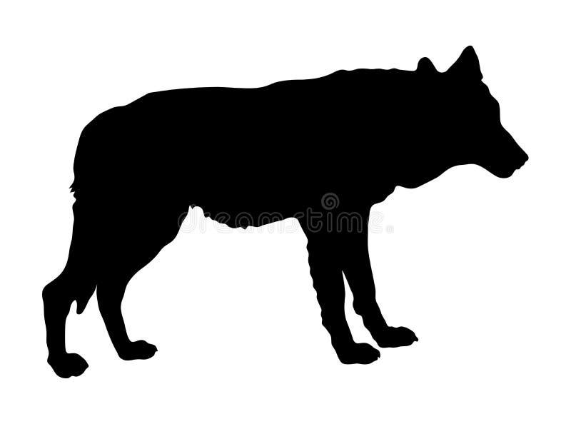 Silueta del lobo permanente imagen de archivo