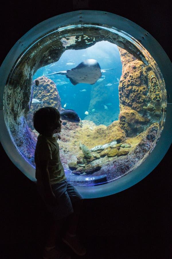 Silueta del muchacho en el acuario fotografía de archivo libre de regalías