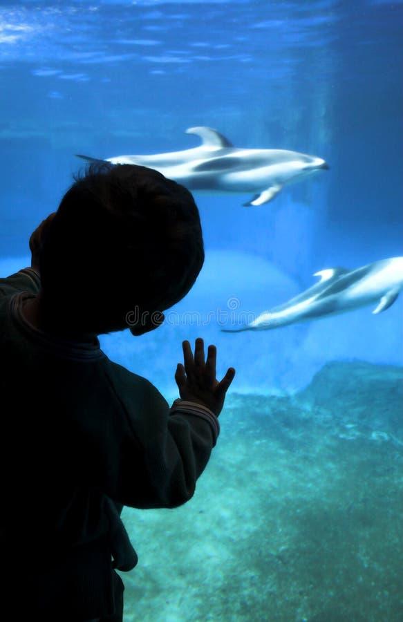 Silueta del niño en el acuario imagen de archivo libre de regalías