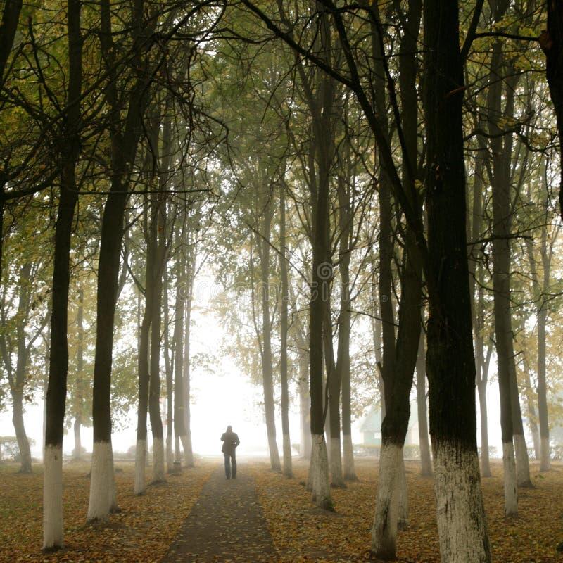 Silueta del otoño fotos de archivo libres de regalías
