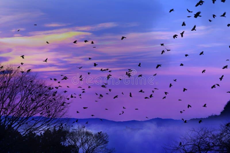 Silueta del pájaro de vuelo con el fondo hermoso de la nube y del cielo imagen de archivo libre de regalías