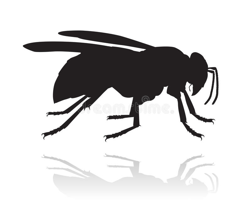 Silueta del vector de la avispa ilustración del vector