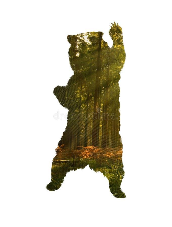 Silueta derecha del oso Oso con el bosque del pino dentro de la silueta stock de ilustración