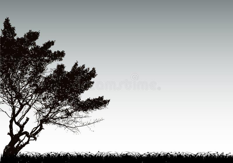 Silueta e hierba del árbol Fondo del vector stock de ilustración