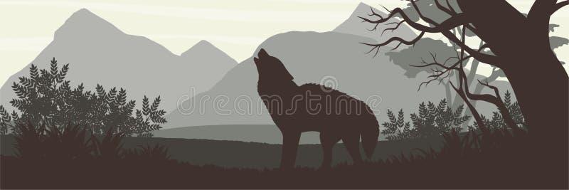 Silueta El lobo salió del bosque y de los aullidos densos contra el contexto de altas montañas ilustración del vector