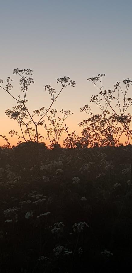 Silueta hermosa de flores en la puesta del sol fotografía de archivo