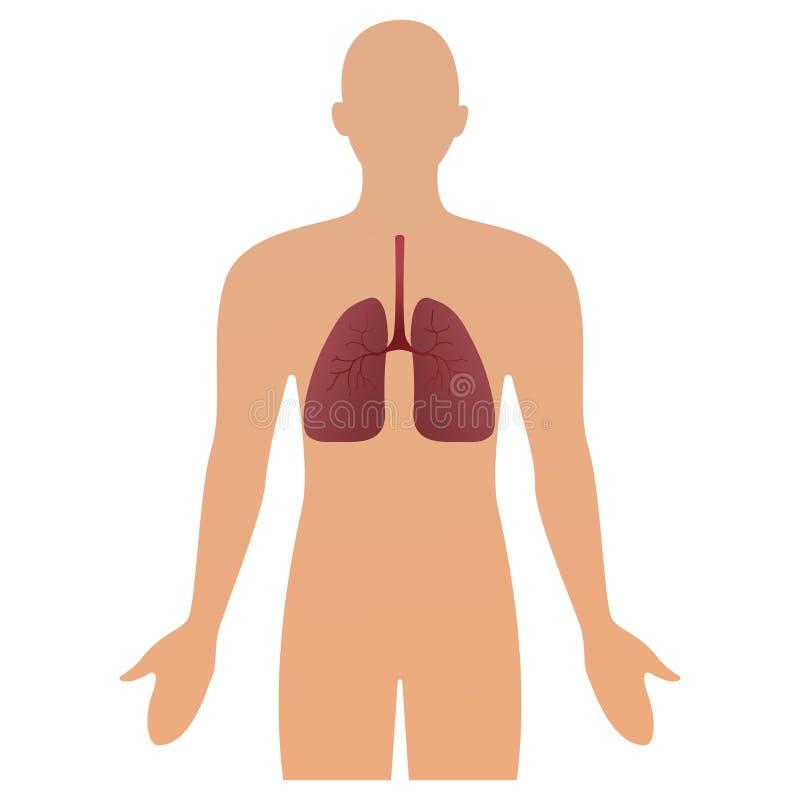 Silueta humana con los pulmones inflamados del sistema respiratorio que muestran enfermedades como el ejemplo del vector del asma stock de ilustración