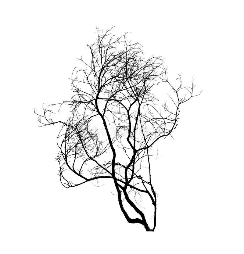 Silueta muerta del árbol aislada en whte foto de archivo