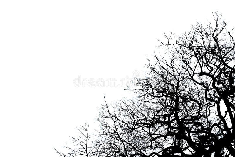 Silueta muerta negra del árbol imagen de archivo libre de regalías