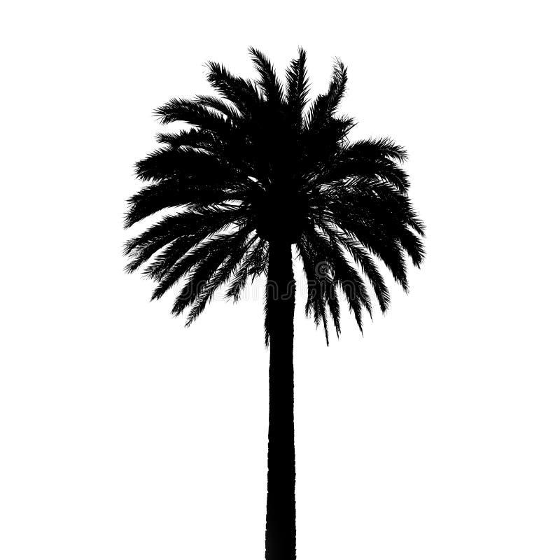 Silueta negra de la palmera aislada en blanco fotos de archivo