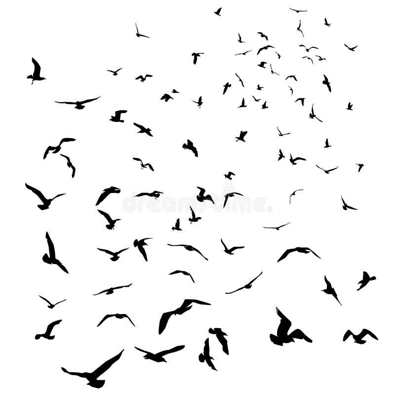 Silueta negra de las gaviotas en fondo blanco aislado Vector stock de ilustración