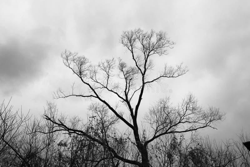 Silueta negra de un árbol fotos de archivo libres de regalías