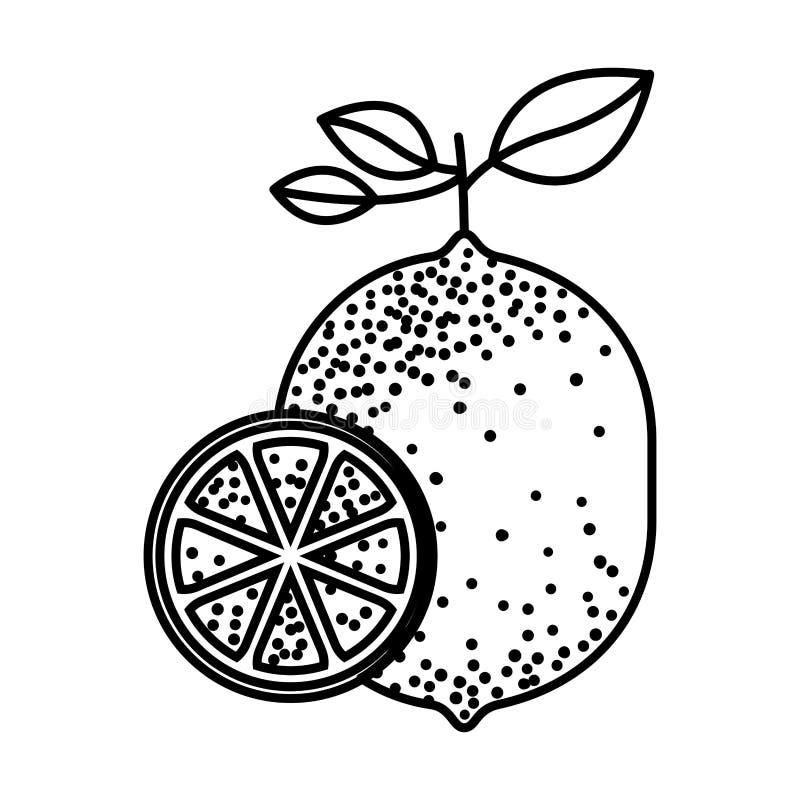 Silueta negra de una rebanada de la fruta del limón y del limón libre illustration