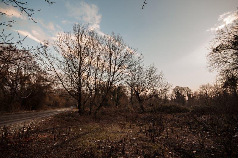 Silueta sola del árbol en campo abierto en la naranja vibrante de la puesta del sol Montañas de Azerbaijan el Cáucaso fotos de archivo libres de regalías