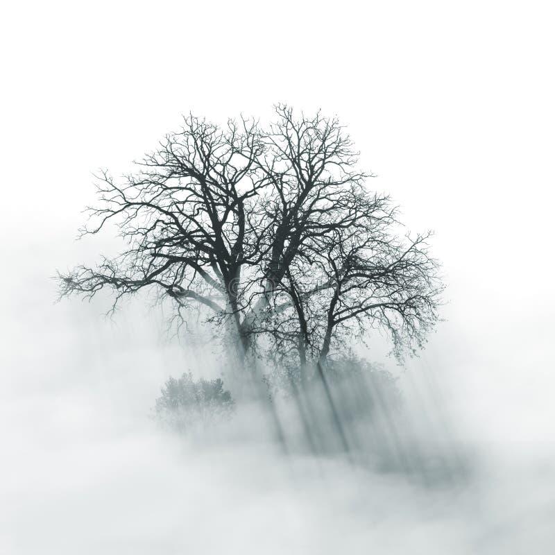 Silueta solitaria del árbol por mañana de niebla imagenes de archivo