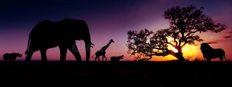 Siluetas africanas famosas de la puesta del sol de los animales Concepto del viaje, de la fauna y del ambiente imágenes de archivo libres de regalías