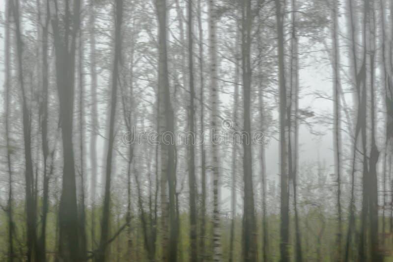 Siluetas de árboles en un día nublado Foco borroso imagenes de archivo