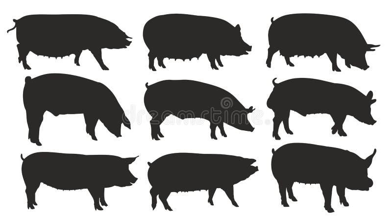 Siluetas de cerdos ilustración del vector