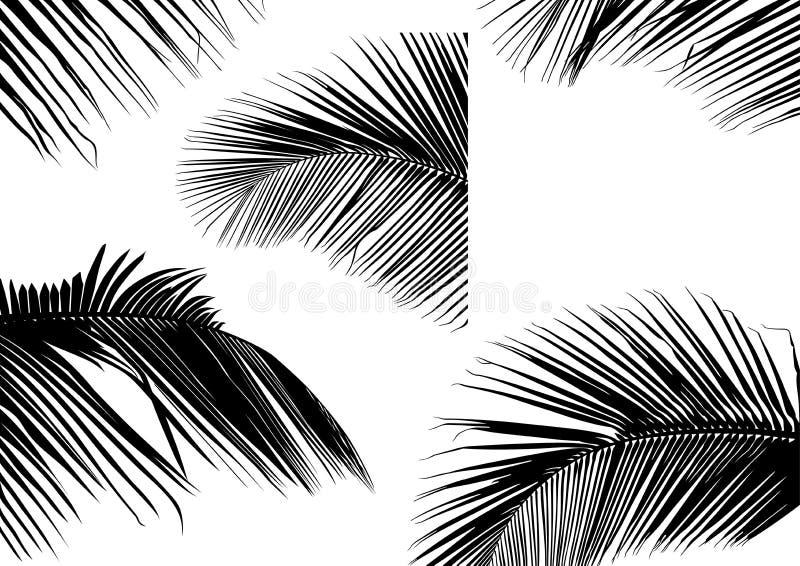 Siluetas de hoja de palma ilustración del vector