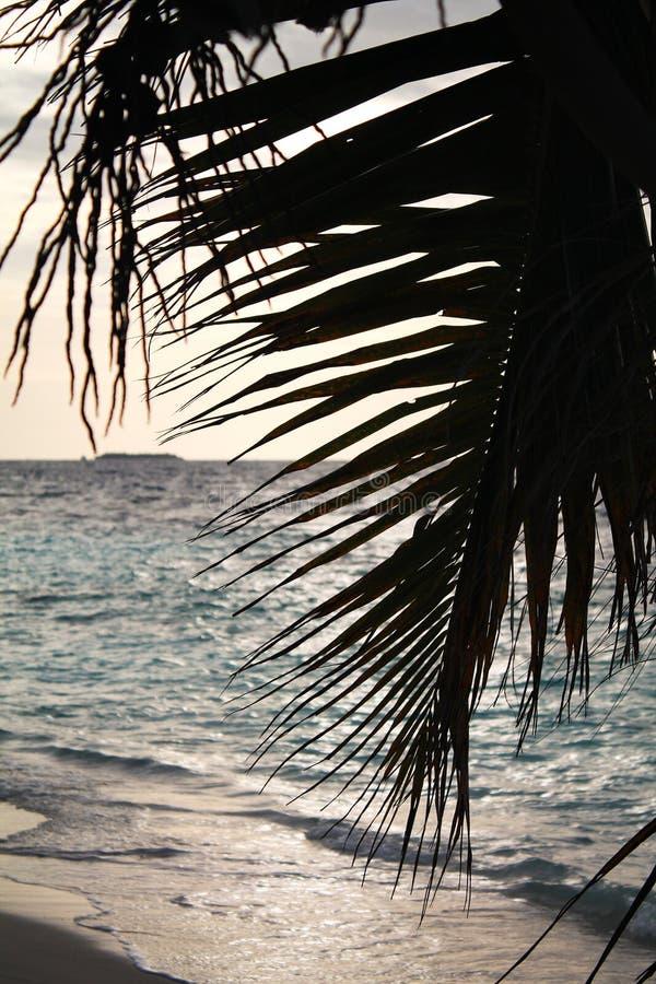Siluetas de hoja de palma delante de un cielo de la puesta del sol de la tarde, con el océano y una isla tropical de Maldivas en  imagen de archivo