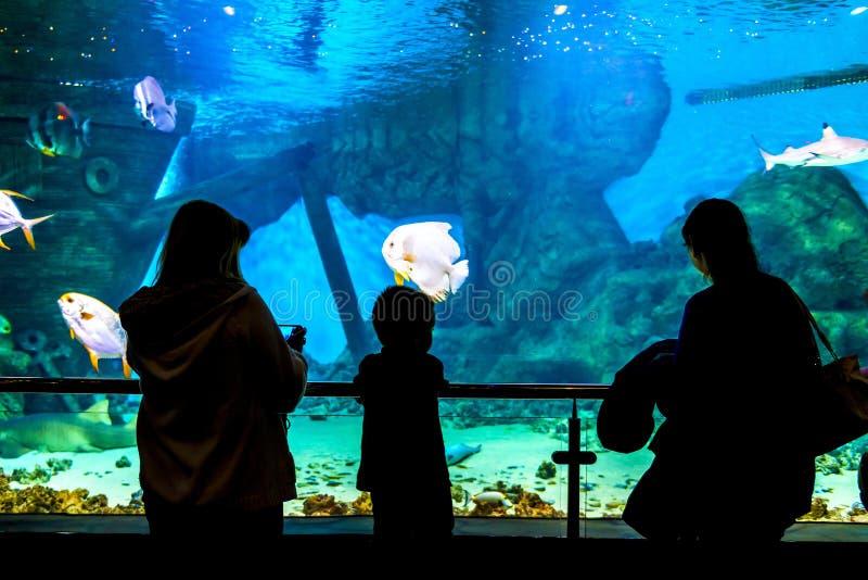 Siluetas de la gente en el Oceanarium imagen de archivo